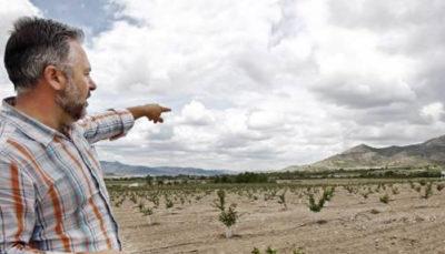 Cerezos y albaricoquero para exportar a Europa